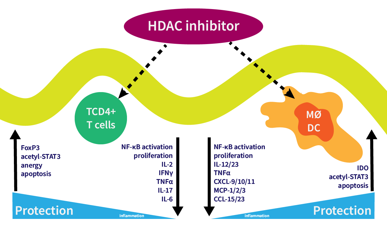 HDACi in inflammation